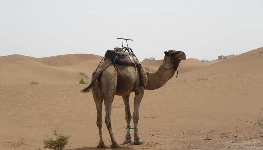 toubkal and Sahara Desert Tour 6 Days