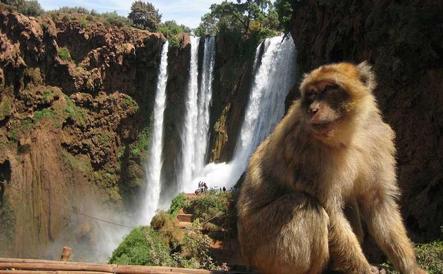 ouzoud-waterfall-excursion-hiking-day-tour